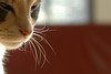 Luna (MiChaH) Tags: pet cat interestingness furry kat luna whiskers explore huisdier poes snorharen interestingness379 i500