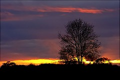 Quick nice sunset (algo) Tags: sunset sky tree photography chilterns algo ricoh redbackground