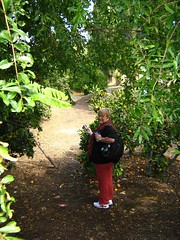 "mom in the mazra'ih orchard • <a style=""font-size:0.8em;"" href=""http://www.flickr.com/photos/70272381@N00/299106376/"" target=""_blank"">View on Flickr</a>"