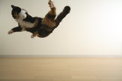 IMG_0555 (junku) Tags: cats cat canon fun eos jump jumping kitten sigma kitties nana 5d    canoneos5d sigma1224mmf4556exdgasphsm eos5d airbornecats
