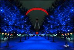 The London Eye (petecarr) Tags: longexposure trees night londoneye wideangle