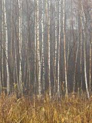 Hidden House ([ Petri ]) Tags: autumn house hidden birch minimalism