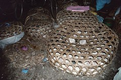 Chickens (tbd1) Tags: africa tanzania troy zanzibar downing slavetrade spicetrade troydowning