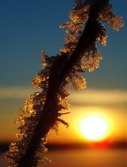 ice crystals (littleBiGsis) Tags: winter sunset orange usa alaska bravo december branch bokeh bluesky anchorage northamerica icecrystals lakehood specnature artlibre anawesomeshot impressedbeauty superaplus aplusphoto