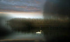 Bird. (augustynbatko) Tags: bird lake bridge nature water mist reeds sky clouds view