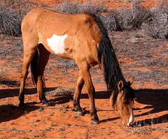Slim Pickins (Sandra Leidholdt) Tags: park arizona horse usa southwest monument america landscape cheval us sandstone scenery unitedstates desert nation tribal american valley desierto navajo paysage cavalli americanwest chevaux navaho amricain americansouthwest sandraleidholdt leidholdt sandyleidholdt