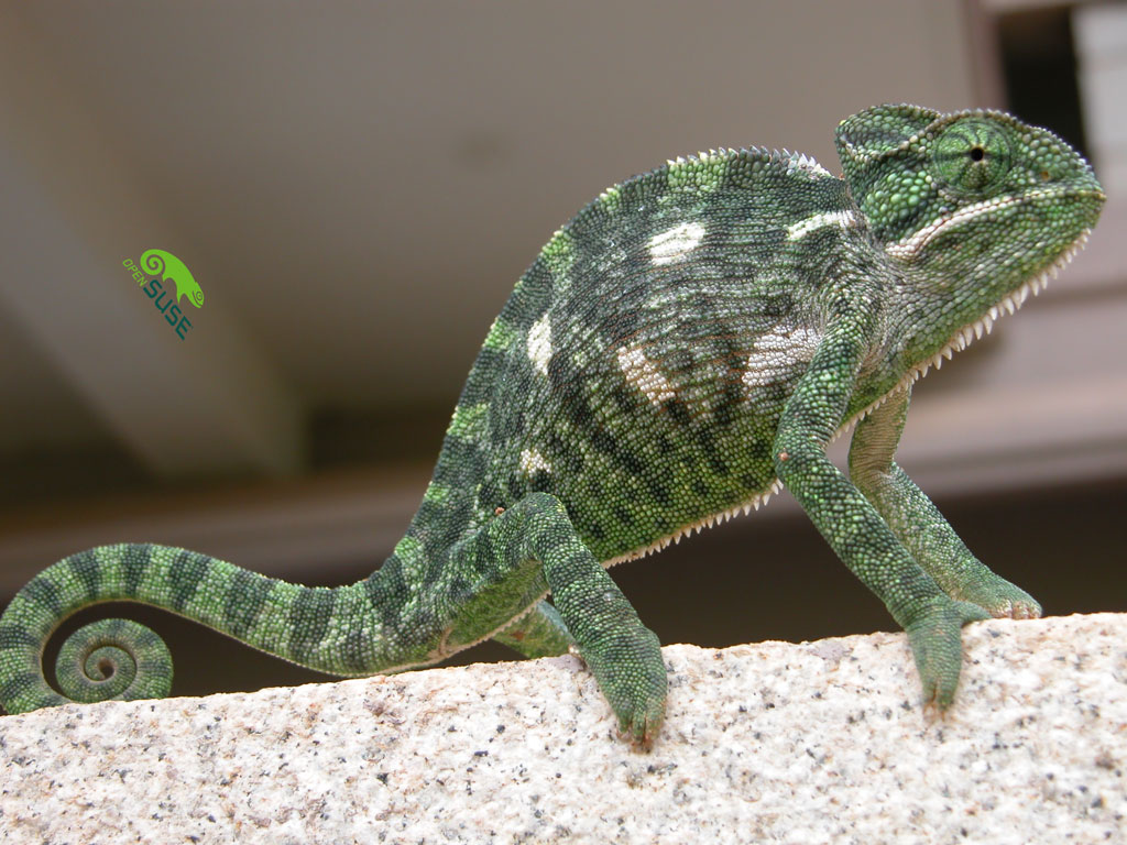 �i found a suse in my garden� gecko paparazzi tryst