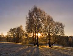 Last rays (Krogen) Tags: winter nature norway landscape norge vinter natur norwegen olympus c7070 noruega scandinavia akershus romerike krogen landskap noorwegen noreg ullensaker skandinavia jessheim nordbytjernet