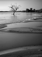 coongie sunrise (liam.jon_d) Tags: blackandwhite bw lake art blancoynegro monochrome wow landscape blackwhite nationalpark sand noiretblanc south curves australian australia paisaje shore eucalyptus sa wilderness paysage schwarzweiss  society landschaft southaustralia campaign pretoebranco  paesaggio biancoenero landschap eucalypts blancinegre tws   wildernesssociety  coongielake coongielakes billdoyle thewildernesssociety innaminckaregionalreserve euclyptuscoolabah