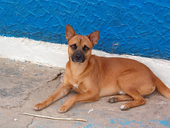 pacho_3 (Consentida) Tags: dogs pacho catira