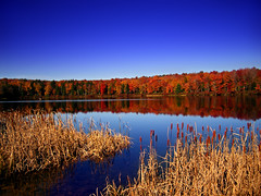 Periphery (Nicholas_T) Tags: autumn sky lake rural pennsylvania cattails creativecommons poconos cloudless glaciallake lackawannacounty easternnorthamericanature lakechampagne