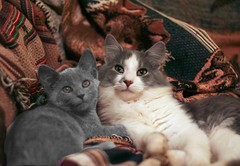 My two best buddies (Boered) Tags: cats cat kitten buddies fuzzy jinx