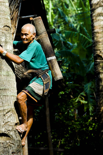 Philippines Pinoy Filipino Pilipino Buhay Life people pictures photos life rural coconut climbing man, elderly old, traditional tuba