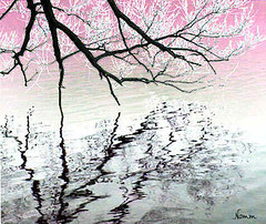 Barely Reflected (nomm de photo) Tags: reflection nature bare photoshopped branches digitallyaltered reinnomm