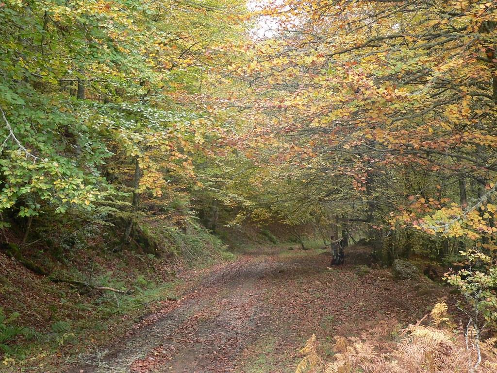 Senda en otoño