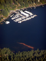 red tide in south Maple Bay, BC (Stop carbon pollution) Tags: canada sexy mexico bc aerialview timeisrunningout cop16