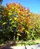 woods5 (Navas) Tags: autumn trees forest germany woods utatathursdaywalk28
