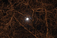 Halloween Moon (~Darin~) Tags: desktop wallpaper moon tree halloween background spooky limbs desktopbackground carquestguy abigfave anawesomeshot