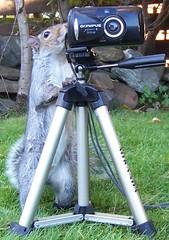 flickr squirrel (Nicolas Valentin) Tags: cute garden ilovenature fun photo squirrel bravo funny topv1111 nuts olympus best excellent amusing instantfav cc1400 80fav p1f1 generouscomments musttrainlocalwildlife anawesomeshot impressedbeauty aplusphoto world100f