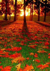 Autumn Sunrise (aremac) Tags: autumn shadow red sun fall topv111 sunrise d50 germany deutschland nikon bravo nikond50 leafs abigfave 123f50 ilvesheim thegoldenmermaid