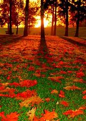 Autumn Sunrise (aremac) Tags: autumn shadow red sun fall topv111 sunrise d50 germany deutschland nikon bravo nikond50 leafs abigfave 123f50 ilvesheim thegoldenmermaid