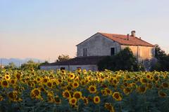 La Bellezza dell'Estate (sgrazied) Tags: sunset summer 20d estate rimini sunflowers canoneos emiliaromagna girasoli sgrazied interphoto