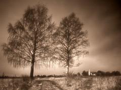 Autmn birches (Krogen) Tags: bw nature norway landscape norge blackwhite natur norwegen olympus c7070 noruega scandinavia akershus romerike krogen landskap noorwegen noreg ullensaker skandinavia hovin photomatix
