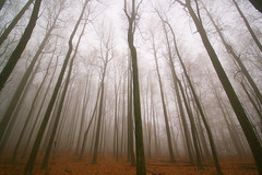 Fog Forest (<pxlpusher>) Tags: park travel trees sky usa tree nature fog skyline forest landscape drive virginia poplar explore national ambient shenandoah 1020 xti pxlpilot pxlpusher