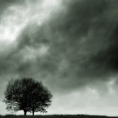 Deadly Shelter (bikeracer) Tags: trees sky blackandwhite grass silhouette clouds topf75 deleteme10 negativespace saveme8 interestingness16 i500 chromatoned explore15nov06 hatenlove
