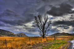 Tree at Red Rock (James Neeley) Tags: idaho hdr 5xp