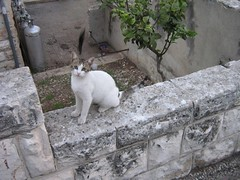 "stray cat in haifa • <a style=""font-size:0.8em;"" href=""http://www.flickr.com/photos/70272381@N00/302512285/"" target=""_blank"">View on Flickr</a>"