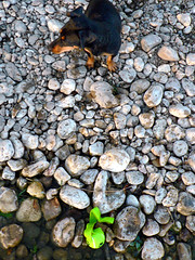 Dog, ball, stones (Yolande...) Tags: dog ball hond bal