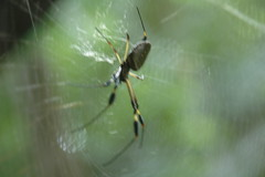 DSC_7630 (Shing Wong Photography) Tags: costarica heredia