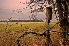 Down on the farm (Kathy~) Tags: pink blue brown tree fence wow landscape bravo michigan farm 2006 explore cw grasslake i500 aplusphoto kathy~ photofaceoffwinner photofaceoffplatinum pfogold pfoplatinum challengew herowinner