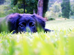 Edward (jeslynphoto) Tags: puppy edward monkeygrass