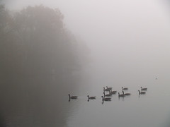 Ducks and fog