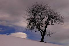 - Winter Silhouette - (idogu) Tags: winter 15fav snow tree silhouette switzerland outdoor hiking central schwyz 20052006 sihlsee iwantsnownow