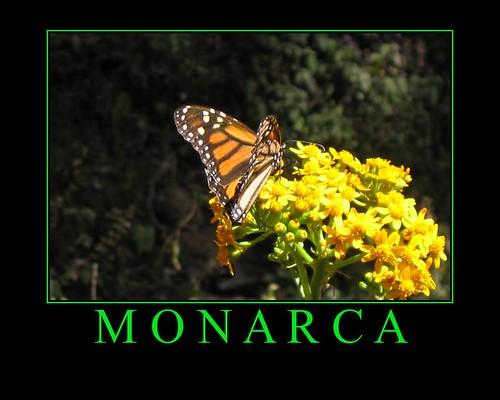 Monarca por Arantxata.