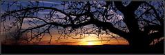 - und immer wieder geht die ..... ... - (HORB-52) Tags: berndsontheimer badenwrttemberg blackforest schwarzwald fortnoire sonnenaufgang sonne