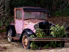 Rhododendronmobile (Jacob...K) Tags: old pink plant car america south southern rhododendron vehicle americana appalachian appalachia