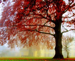 Old Tree with Castle (aremac) Tags: autumn red mist tree castle fall fog d50 germany deutschland nikon quality nikond50 instantfave outstandingshots gtaggroup goddaym1 abigfave neckarhausen artlibre outstandingshotshighlight thegoldenmermaid bestofautumn