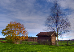 November trees (Krogen) Tags: history nature norway landscape norge natur norwegen olympus c7070 noruega nes scandinavia akershus gamle historie romerike krogen landskap noorwegen noreg skandinavia photomatix hvam
