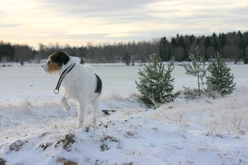 Oskar spanar