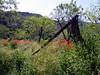 poppies 2 (sawyer_derek) Tags: lasalpujarras amapolas cadiar