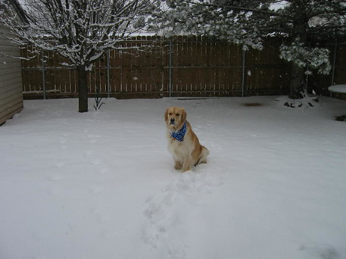 Pudgy dog in the snow