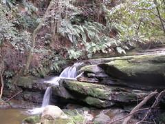 Waterfall in Blue Mountains (Joybelle007) Tags: water waterfall rocks australia ferns bluemountainsnsw