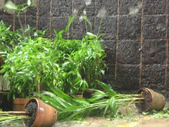IMG_1383 (Mykl Syco) Tags: canon aftermath flood philippines powershot disaster makati typhoon pilipinas syke dolero a410 bagyo milenyo