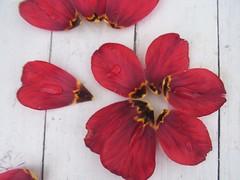cvjet života