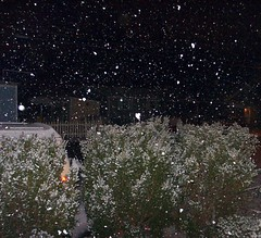 Snow Falling at Night
