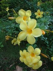 manila-20061016-016 (jrervin) Tags: flowers vacation nature philippines filipinas elnido palawan